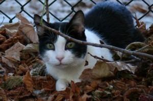 Katze mit SDÜ und Nierenversagen
