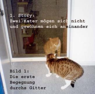 zwei kater aneinander gew hnen berliner stadtkatzen e v. Black Bedroom Furniture Sets. Home Design Ideas