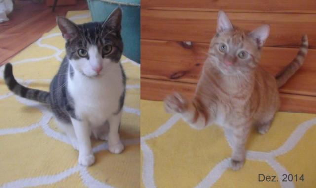 640-2014-12-catsitting-beide-Edel