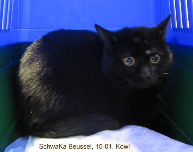 640-Schwaka-Beussel-15-01-Kowi