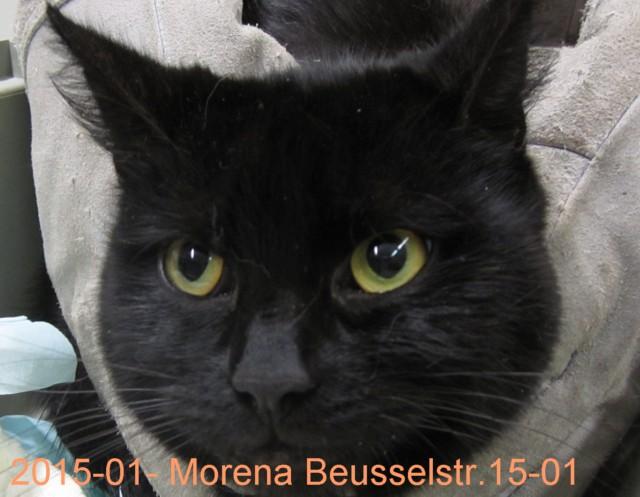 Fund-Beusselstr-Morena-1501