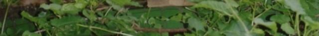 Fotobalken-halb-gruen