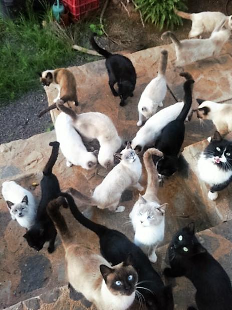 Cats-Los-Belones-15-11
