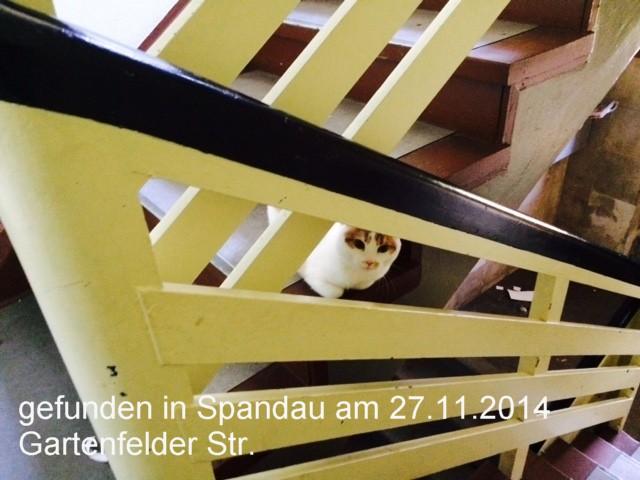 2014-11-27-Gartenfelder-15-T