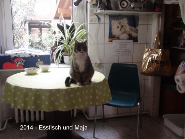 640-2014-09-Esstisch+Maja 032
