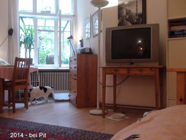 640-2014-09-Wohnung vorn Pit 004