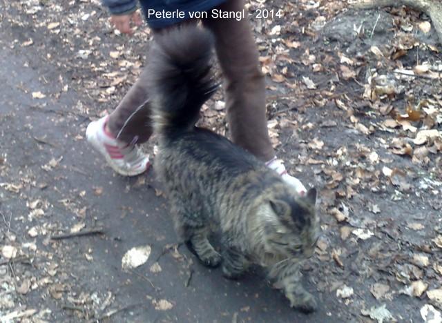 640-2014-Peterle-von-Stangl-02