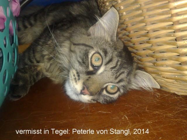 640-2014-Peterle-von-Stangl-Portrait-07