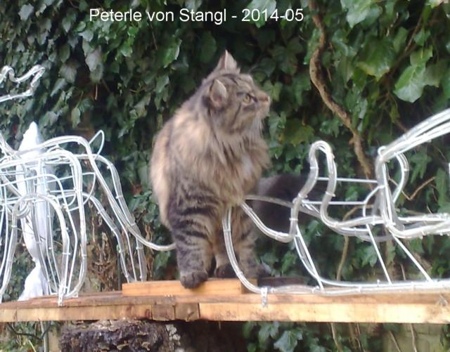 640-2014-Peterle-von-Stangl-vorn-05