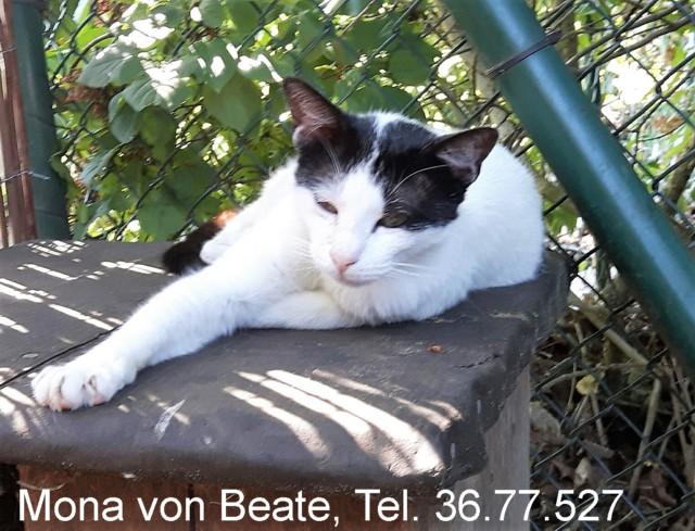 640-t-Mona-von-Beate-1606