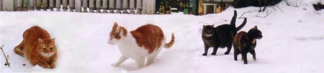 Ros-Pet-Ntscho-Fufu-Schnee-Balk640