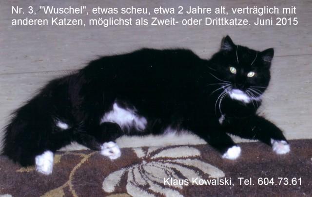 nr3-Wuschel-vKlaus-201506-640
