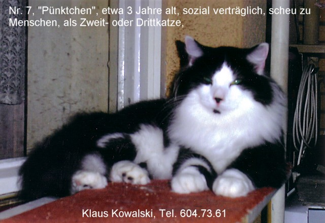 nr7-PuenktchenvKlaus-2015-640
