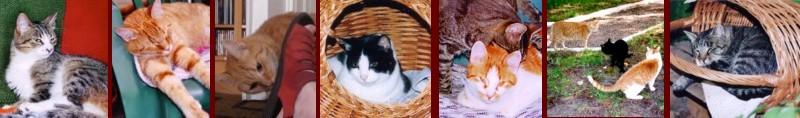 800-Balken-2010-Cats-01