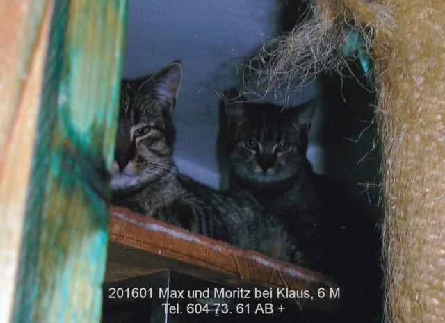 640-Klaus-Max+Moritz-1601-6M