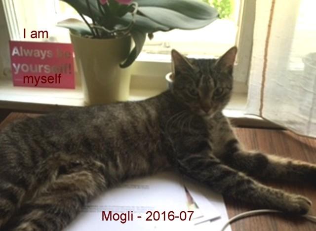 640-T-Mogli_1