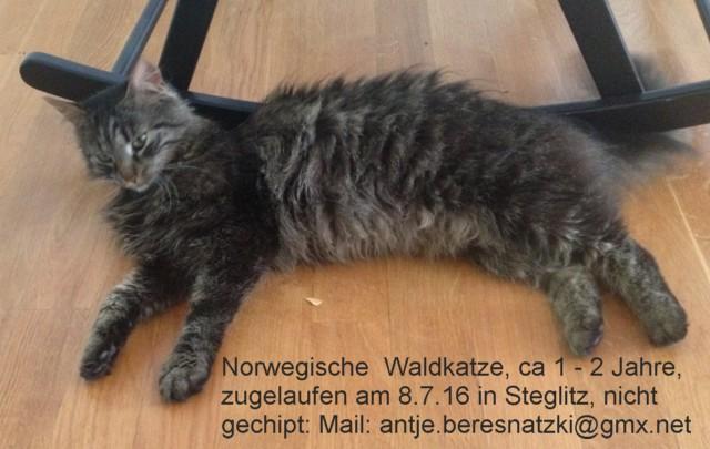 640-T-Waldi-Steglitz-1-IMG_2888