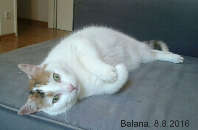 640-T-Belana-16-08-08